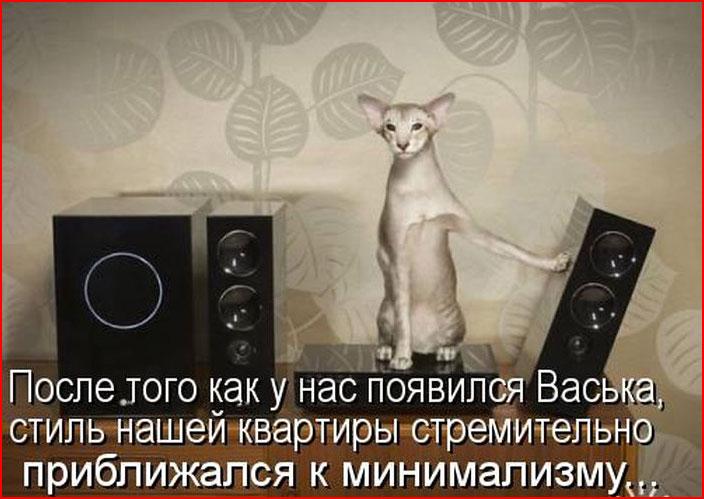 Котоматрицы  (гей блюсик 9079)