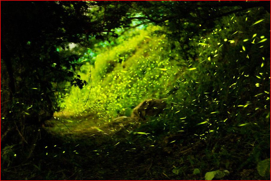 Светлячки в лесу  (гей блюсик 9235)