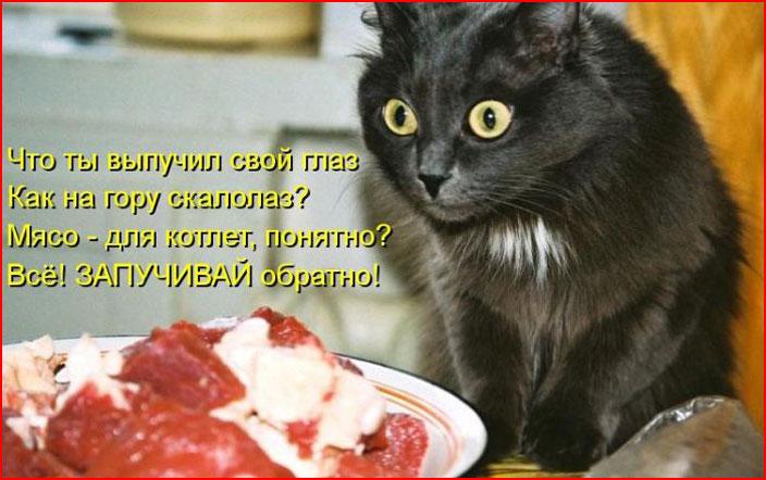 Лучшие котоматрицы  (гей блюсик 9275)
