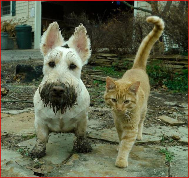 Забавные кошки  (гей блюсик 9315)