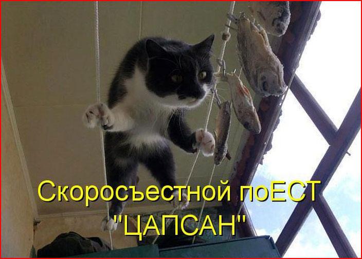 Котоматрицы  (гей блюсик 9359)