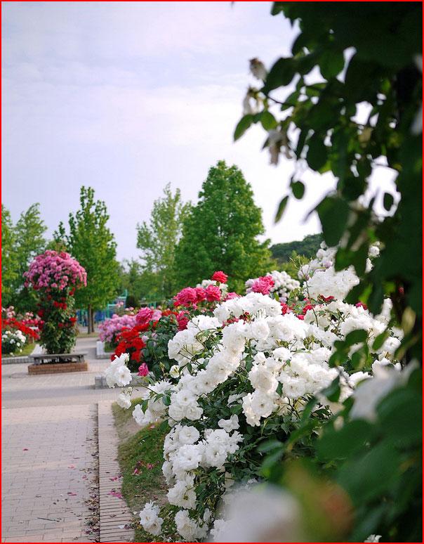 В парке Чаир  (гей блюсик 9451)