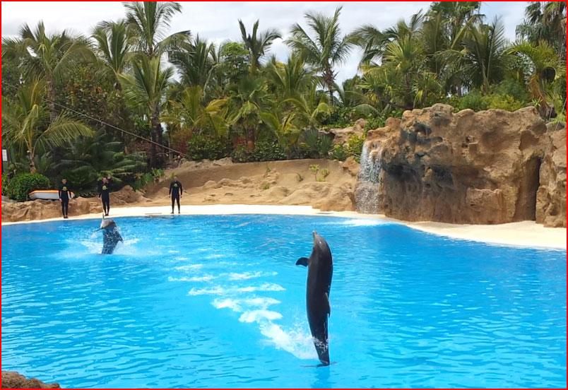 Лоро парк - крупнейший зоосад на Канарах (видео)  (гей блюсик 9634)