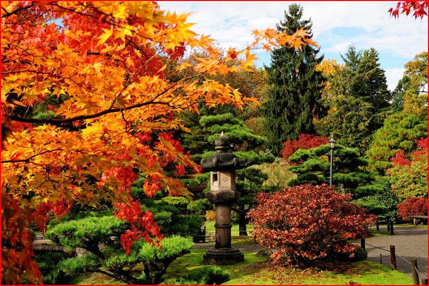 Осень в Японии  (гей блюсик 9691)