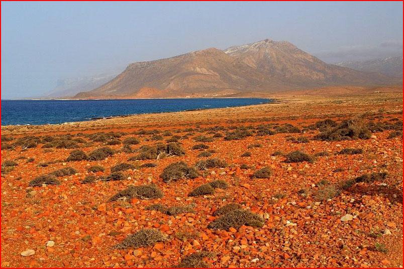 Удивительный остров Сокотра  (гей блюсик 9743)