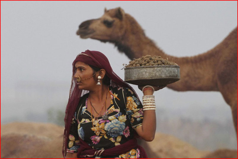 Верблюжья ярмарка  (гей блюсик 9903)