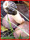 Осенний сюрприз  (гей фото, блюсик 1076)