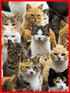 Остров кошек  (гей фото, блюсик 11795)