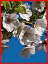Сады цветут!  (гей фото, блюсик 12059)