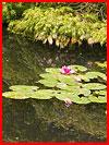 Сказочный сад Compton Acres  (гей фото, блюсик 12667)