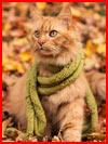 Осень и котэ  (гей фото, блюсик 14180)