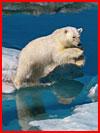 Ледяная красота Пола Никлена  (гей фото, блюсик 14491)