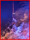 Фестиваль Круг Света в Останкино (видео)  (гей фото, блюсик 15536)