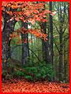 Осенние пейзажи Сергея Полюшко  (гей фото, блюсик 15591)