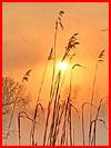 Зимний этюд  (гей фото, блюсик 15951)