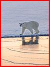 Конкурс дикой природы Wildlife Photographer of the Year  (гей фото, блюсик 15959)