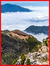 Мадейра  (гей фото, блюсик 16051)