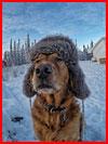 Животные зимой  (гей фото, блюсик 16095)