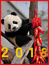 Китайский Новый 2018 год  (гей фото, блюсик 16127)