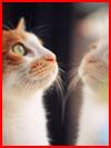 День кошек  (гей фото, блюсик 16167)