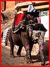 На слонах в форт Амер  (гей фото, блюсик 16199)