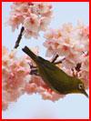 Весна цветёт  (гей фото, блюсик 16443)