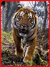 Конкурс дикой фотографии Wildlife Photographer of the Year 2018  (гей фото, блюсик 16947)