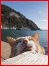 Остров кошек  (гей фото, блюсик 17051)