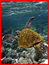 Путешествие на Галапагосские острова  (гей фото, блюсик 17055)