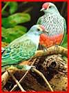 Птицы  (гей фото, блюсик 1747)