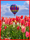 Фестиваль тюльпанов  (гей фото, блюсик 17651)