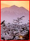Пора цветенья сакуры  (гей фото, блюсик 17703)