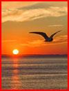 Мечты о море. Фотозарисовка  (гей фото, блюсик 17719)