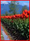 Праздник весны  (гей фото, блюсик 17775)