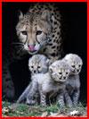Животные в фотографиях  (гей фото, блюсик 18007)