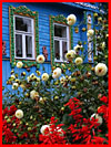 Цветы у дома  (гей фото, блюсик 18247)