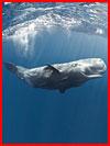Заплыв с кашалотом  (гей фото, блюсик 18395)