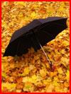 Осень с зонтами. Фотозарисовка  (гей фото, блюсик 18411)