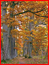Осенняя зарисовка  (гей фото, блюсик 18431)