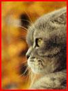 Животные тоже любят осень  (гей фото, блюсик 18451)