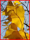 Елабужская осень  (гей фото, блюсик 18471)
