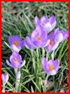 То ли ещё зима, то ли уже весна…  (гей фото, блюсик 19011)