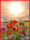 В мире цветов  (гей фото, блюсик 19143)