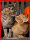 Деревенские кошки. Фотозарисовка  (гей фото, блюсик 19903)