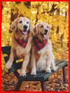Фотопутешествие с Лиззи и Элли  (гей фото, блюсик 19927)