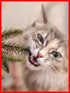 Как кошки Новый год встречали  (гей фото, блюсик 20315)