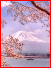Сакура на фотографиях Макико Самедзима  (гей фото, блюсик 20583)