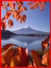 Осень фотохудожника Макико Макото  (гей фото, блюсик 21343)