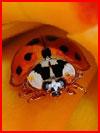 Животный мир в фотографиях от National Geographic  (гей фото, блюсик 8756)