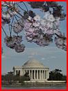 Фестиваль цветения сакуры в Вашингтоне 2013  (гей фото, блюсик 9027)